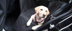 Hundetransport im Auto auf der Rückbank ohne Schmutz und Dreck