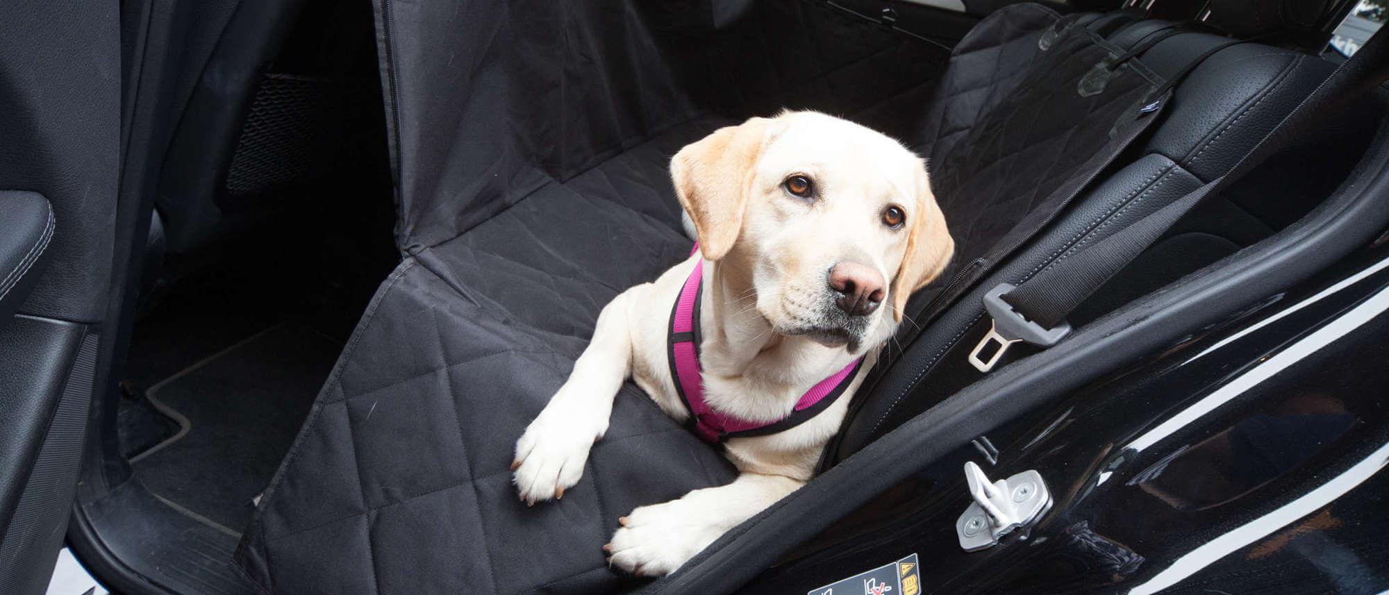 hundetransport im auto auf der r ckbank floxik premium hundeprodukte. Black Bedroom Furniture Sets. Home Design Ideas