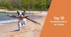 Titelbild Top 10 Hundestrände an der Ostsee