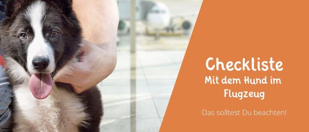 Titelbild Blog Eintrag zum Thema Hund im Flugzeug
