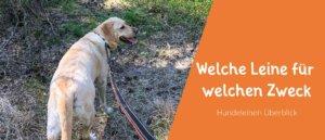 Blogbeitragsbild Welche Hundeleine für welchen Zweck? Ein Hundeleinen Überblick