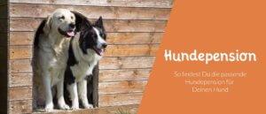 Titelbild Blogbeitrag So findest Du die richtige Hundepension für Deinen Hund