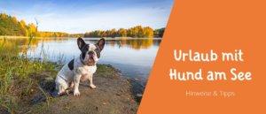 Blogbeitragsbild Urlaub mit Hund am See - Hinweise, Tipps und Empfehlungen