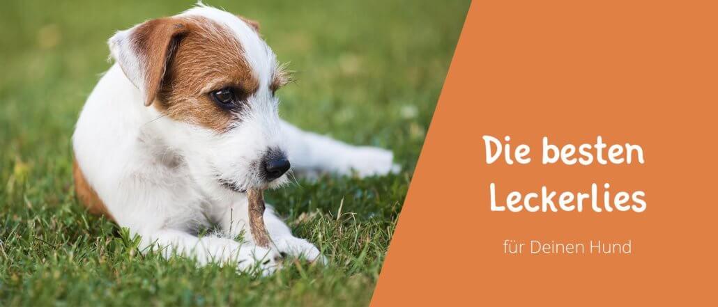 Beitragsbild Blogbeitrag Hundeleckerlies - Die besten Leckerlies für Deinen Hund - Eine Auswahl