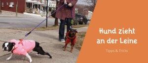 Beitragsbild Blogbeitrag der Hund zieht an der Leine - was tun? Tipps und Tricks