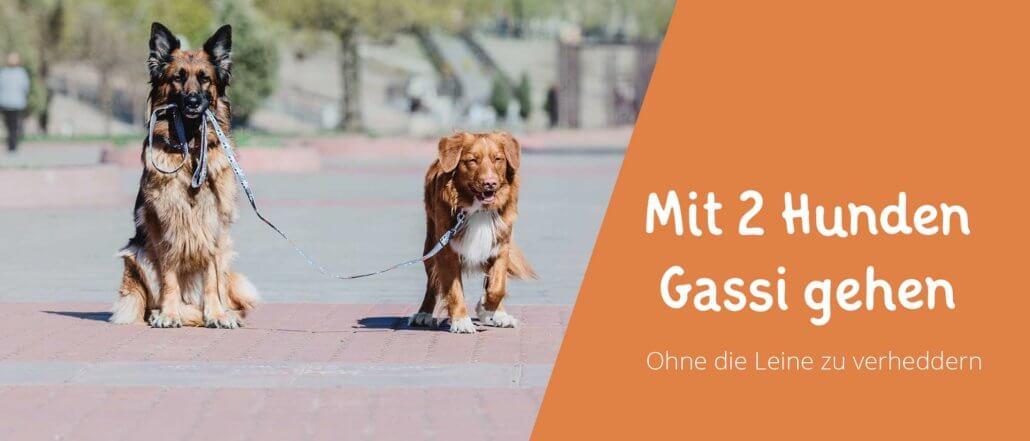 Blogbeitragsbild für Aritkel Mit 2 Hunden Gassi gehen