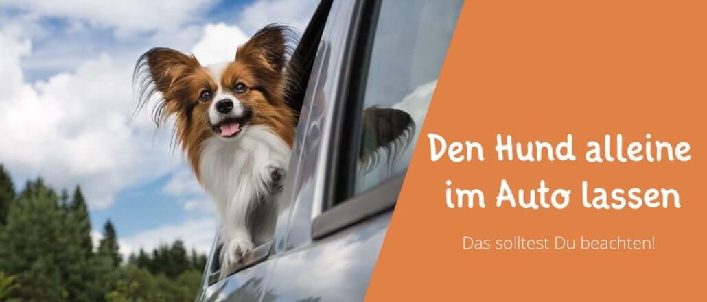Blogbeitragsbild für Aritkel Den Hund allein im Auto lassen