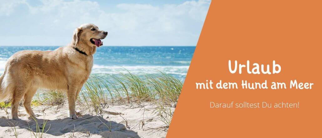 Blogbeitragsbild Urlaub mit Hund am Meer