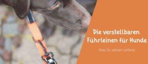 Blogbeitragsbild für Aritkel Die verstellbare Führleinen für den Hund