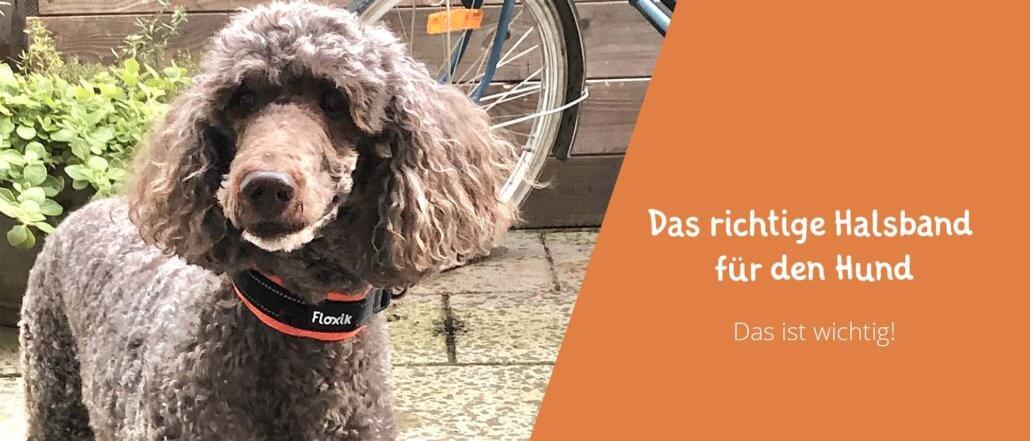 Blogbeitrag Bild Das richtige Hundehalsband für den Hund. Darauf muss man bei seiner Wahl achten.