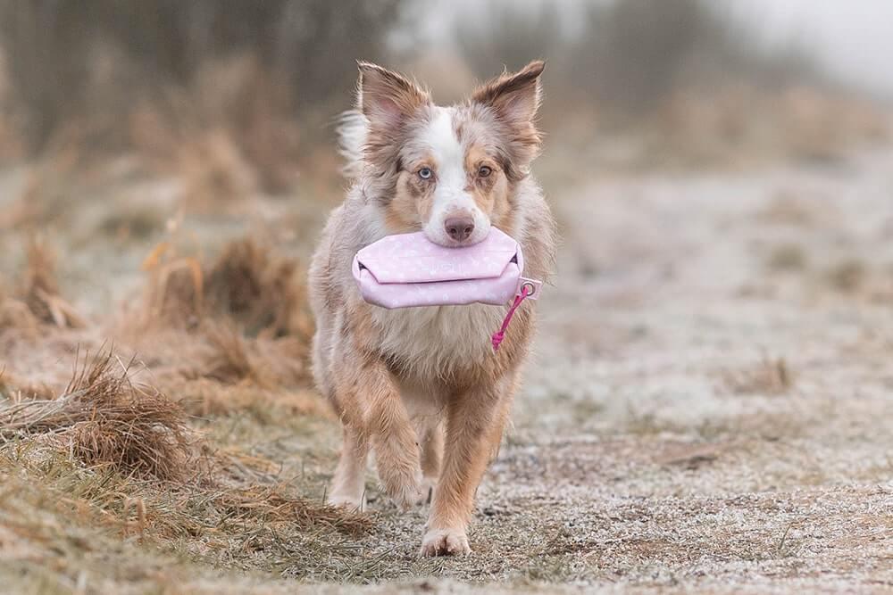 Spaziergänge mit Hund interessant gestalten