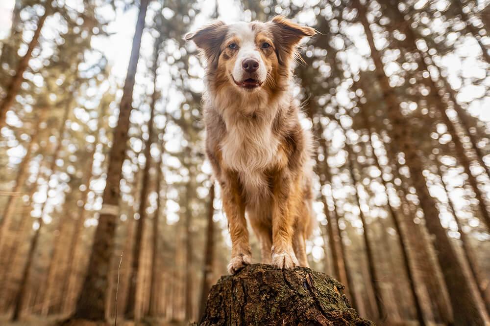Spaziergänge mit Hund interessanter gestalten