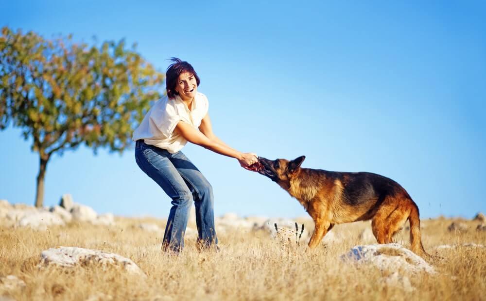 Bindung mit Hund durch Spielen aufbauen