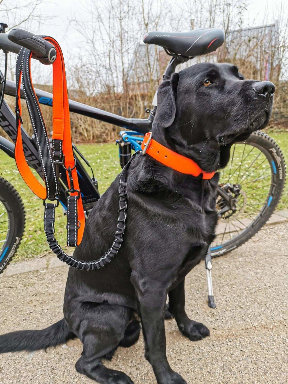Elastische Hundeleine beim Fahrradfahren