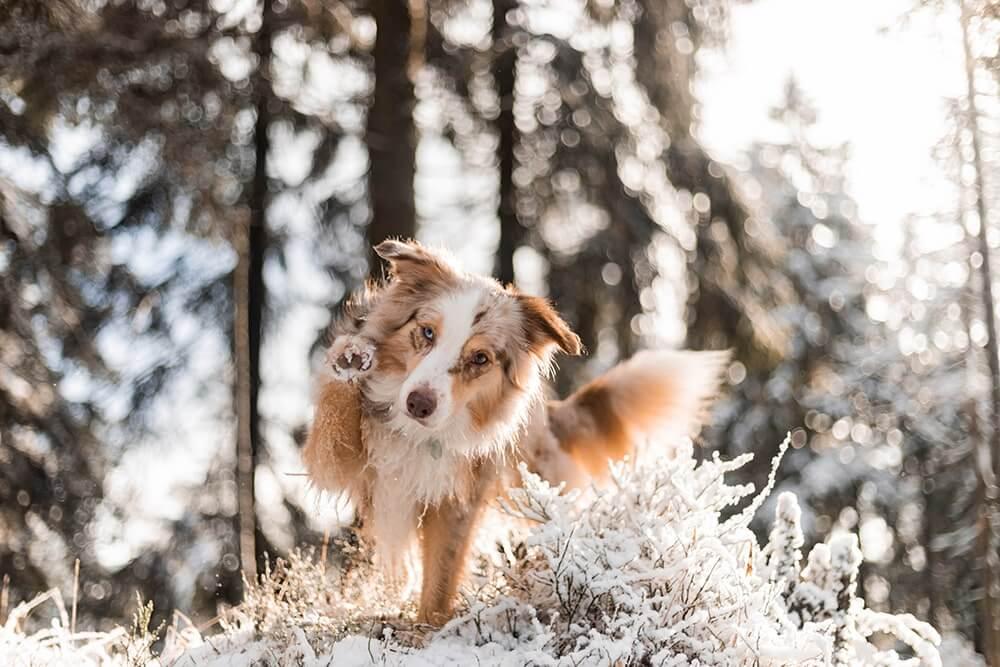 Urlaub mit Hund in Deutschland