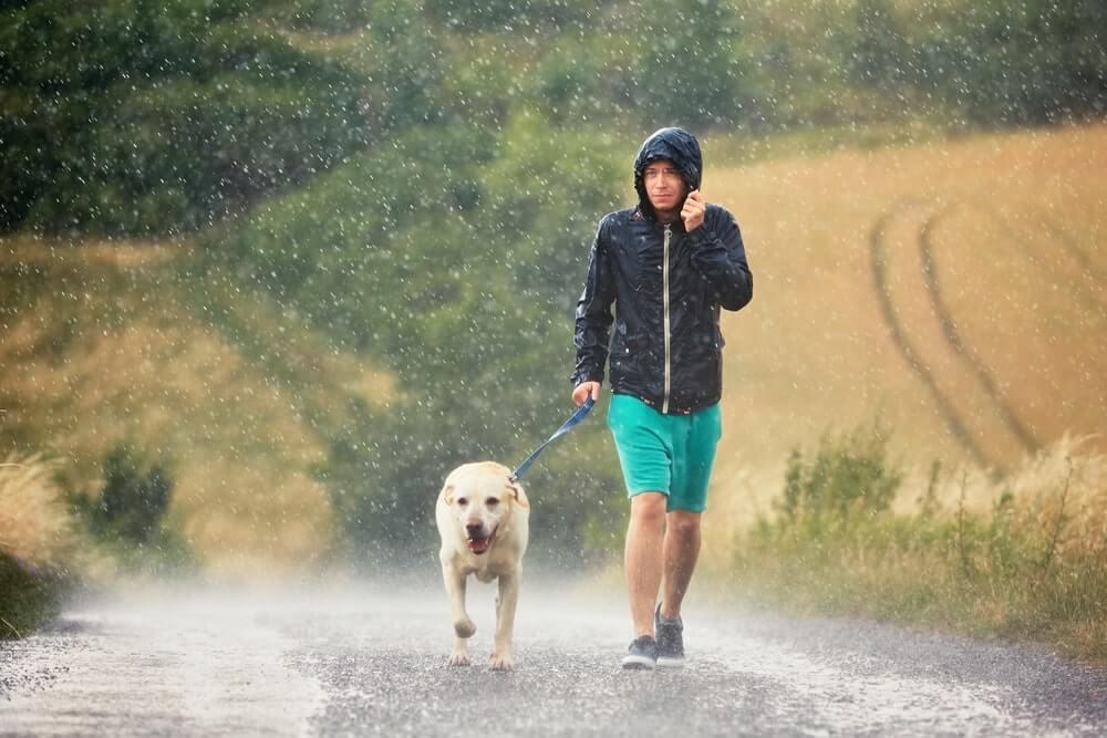 Gewitter und Hund