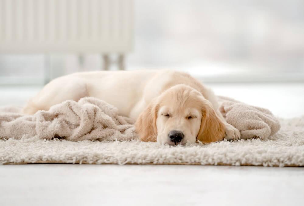 Gewitter und Hunde - Angst bekämpfen