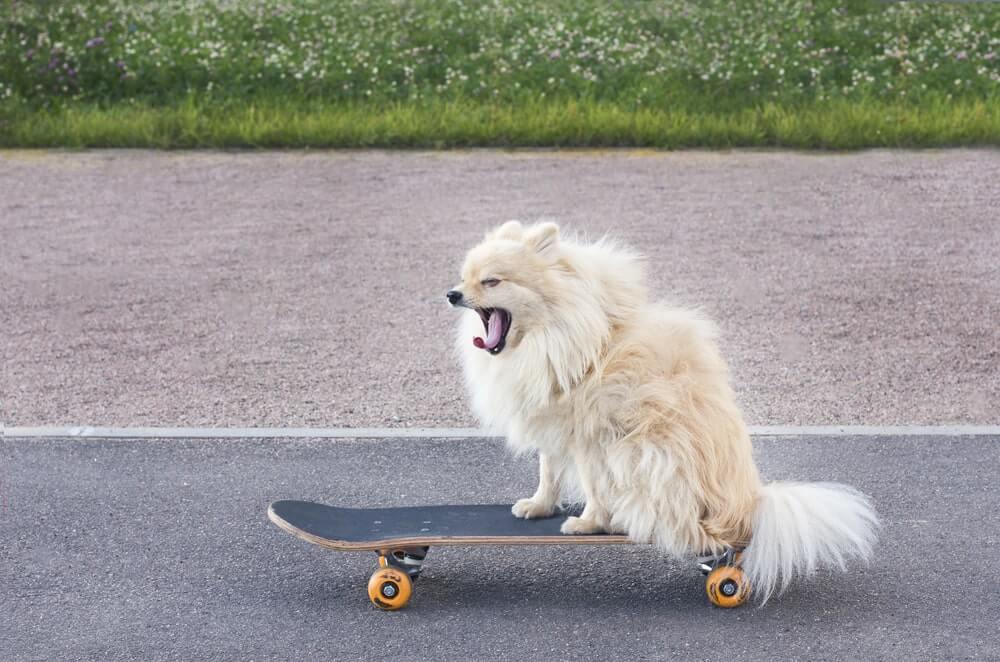 Hundesprache: Was bedeutet das Gähnen?