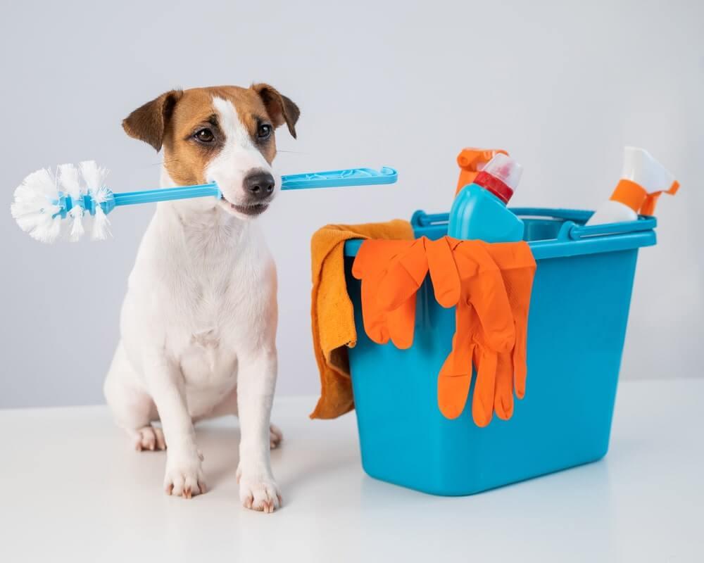 Hund als Haushaltshilfe: Putzmittel sind tabu
