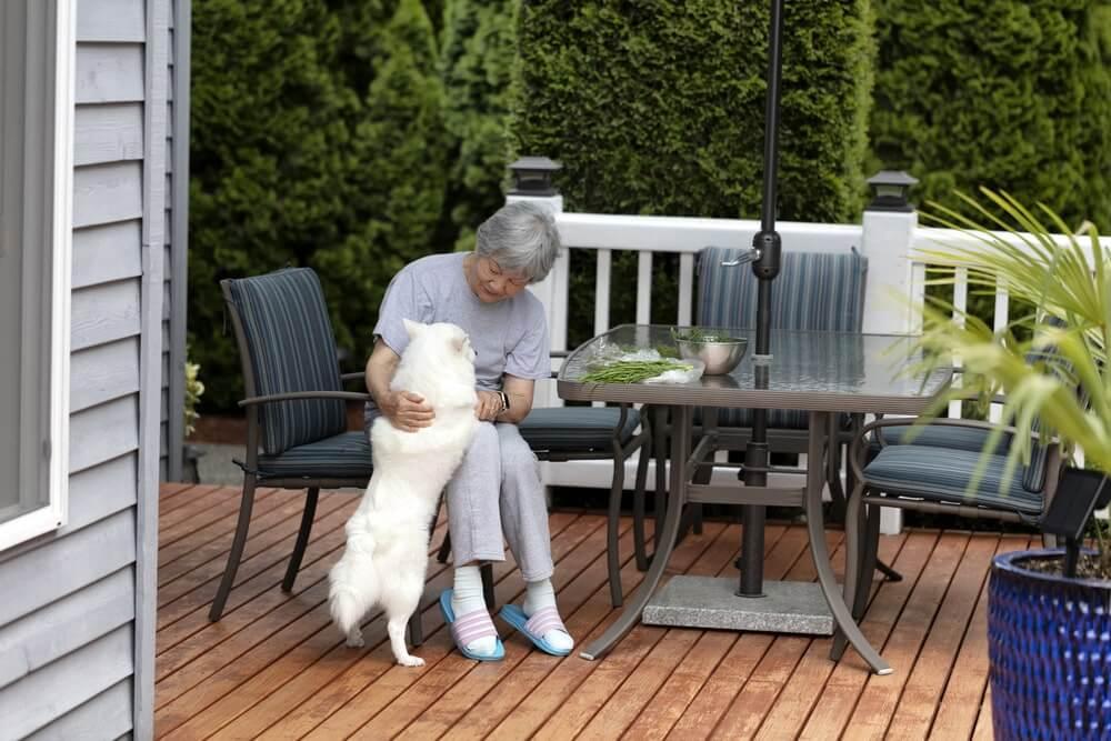 Hundesprache: Anspringen vom Hund verstehen
