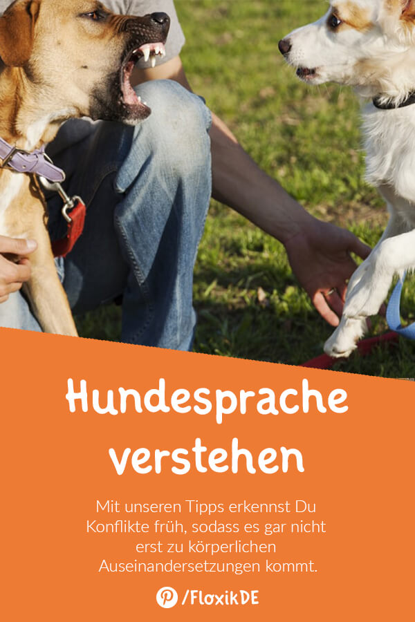 Hundesprache Pinterest