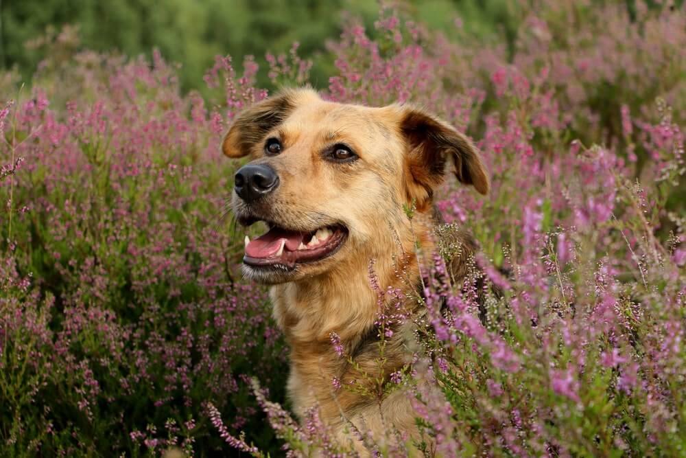 Wandern mit Hund in der Heide